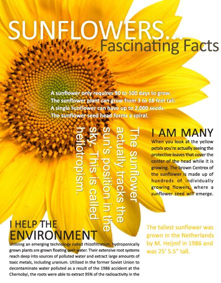 #Sunflowers are yellow; the color of joy, happiness and hope—symbolizing that #depression can be successful treated