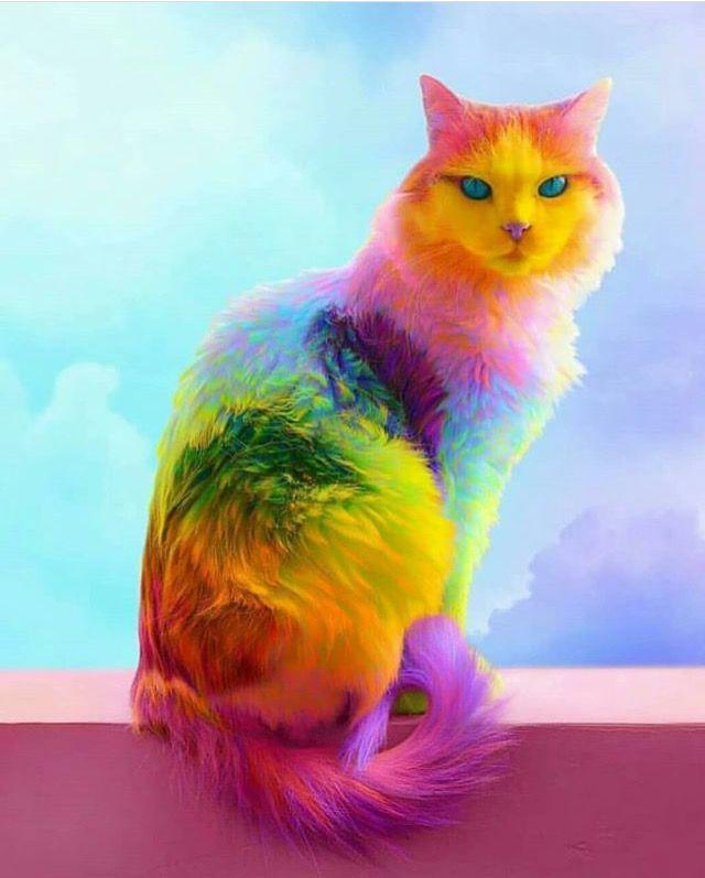 разноцветные кошки фото пространства хватило