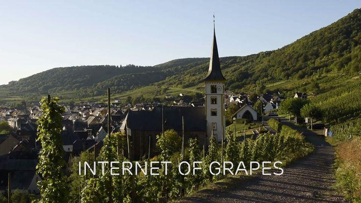 Internet of Things in your vineyard