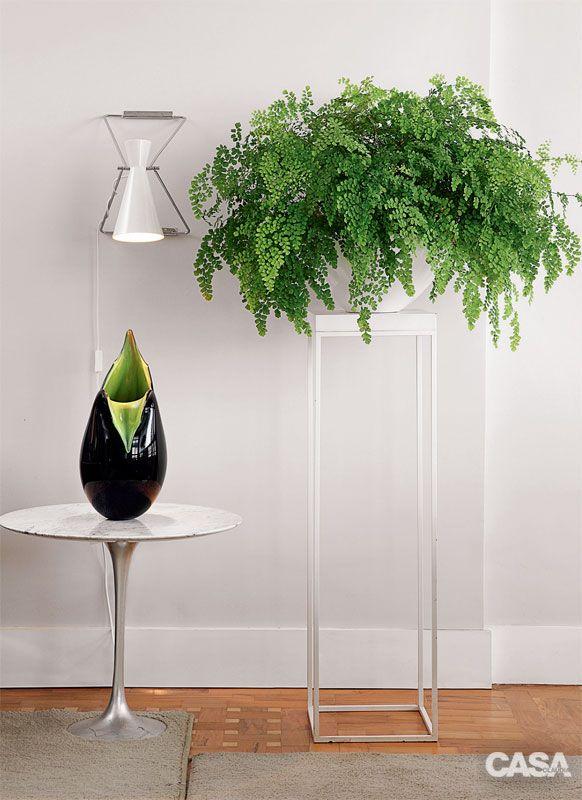 Arquideias plantas para cultivar dentro de casa horta - Pedestal para plantas ...