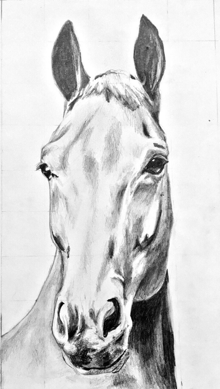 Pin By Kathie Balfour On Horses I Love Horse Drawings Horses Equus [ 1280 x 725 Pixel ]