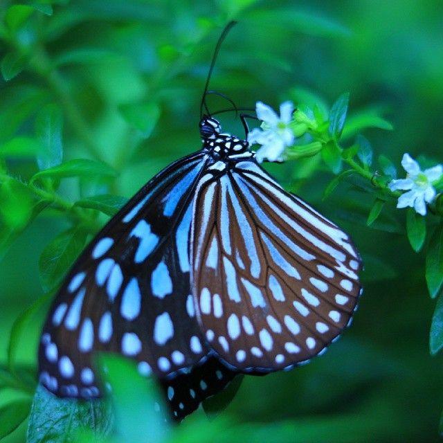 """""""Blue tigress"""""""