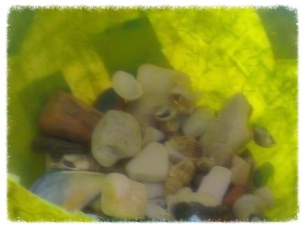 Un bel mucchio di conchiglie nel porta oggetti di carta di riso...
