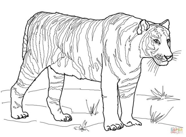 25 Creative Image Of Tiger Coloring Page Unicorn Coloring Pages