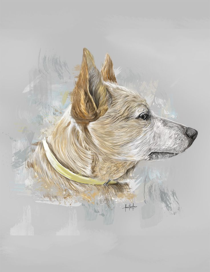 #ilustracion #illustration #art #drawing #dog #arte