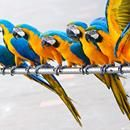 Enjoy some fun facts about Parrots!! #PawsAbroad #Parrots #FunFacts