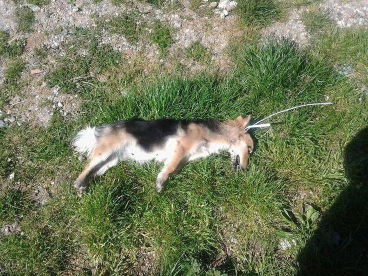 Cane impiccato e ucciso a Montalto Uffugo in Calabria