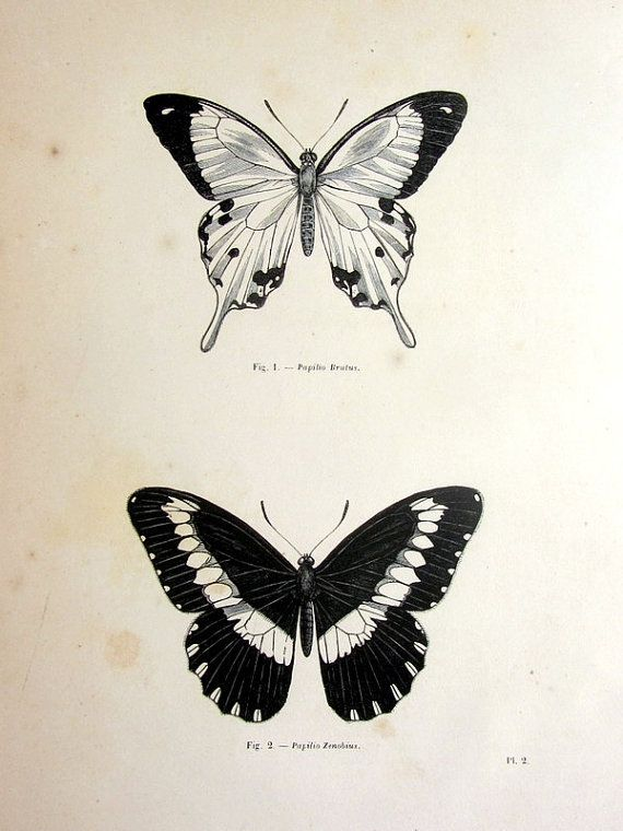 Vintage butterfly print antique original 1860 by TheLyraNebula, $25.00