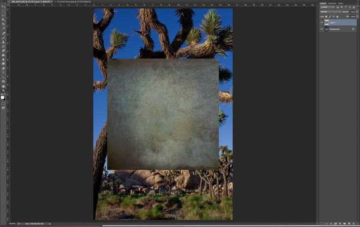 I have pasted my texture onto my base Joshua Tree image. It will now need to be transformed to fill the size of the base image.