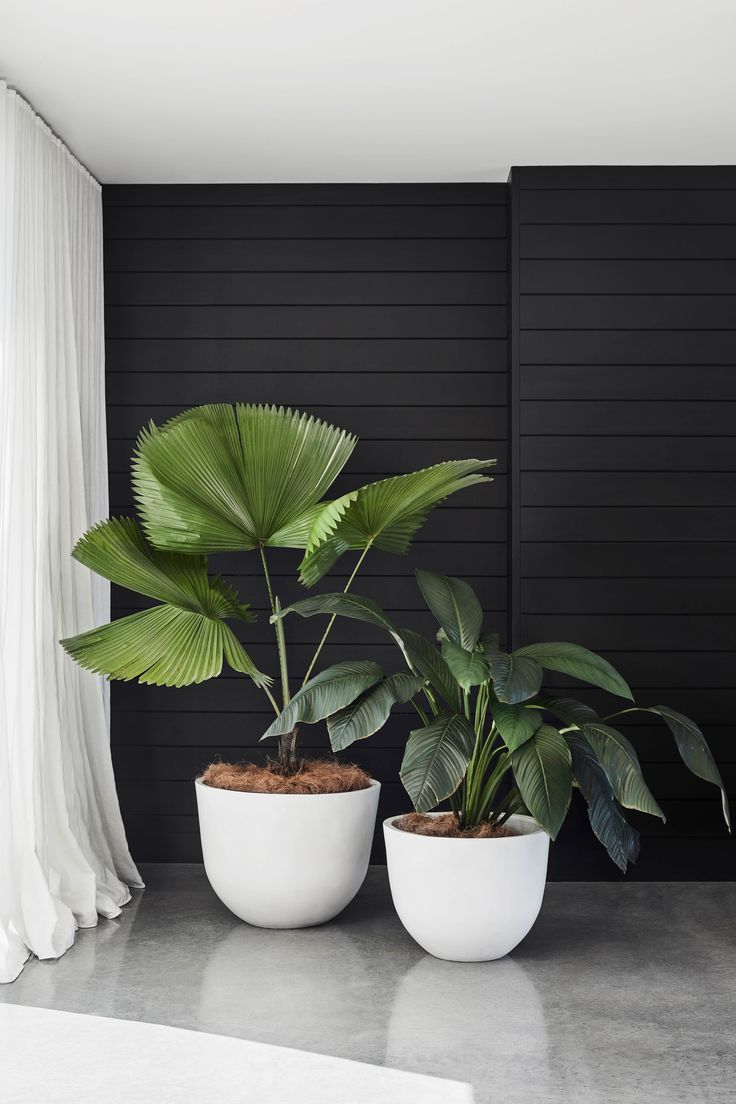 Potted Bliss: Houseplants 101