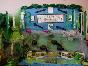 Wonderful classroom display to show the life cycle of a frog!