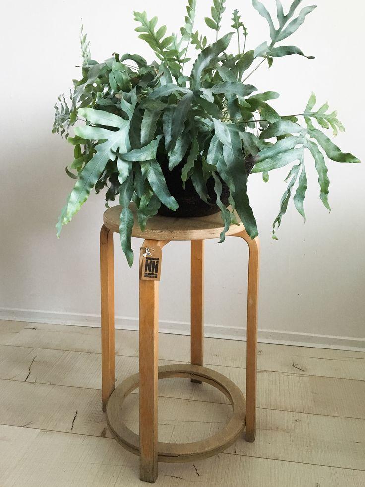 Rustieke verweerde kruk om lekker op te zitten óf een toffe grote plant op te zetten. 60 centimeter hoog, kleine beschadiging op de onderste rand van het hout. € 12.50