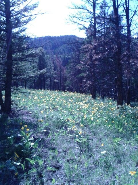 78 Best images about Helena Mt. on Pinterest | Virginia ...