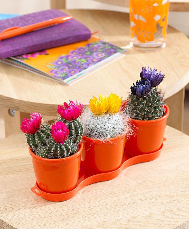 Kaktustrio