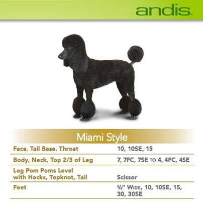 My miami doggy style chick - 1 9