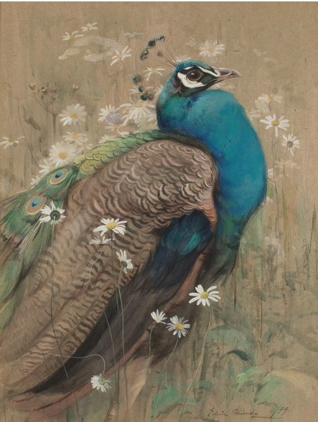 #Edwin #John #Alexander: #Peacock, 1899  Framed (ref: 8023) #Signed  #Gouache on #cardboard #art #modernart #Britishart #llfa #bird #painting #wildlife