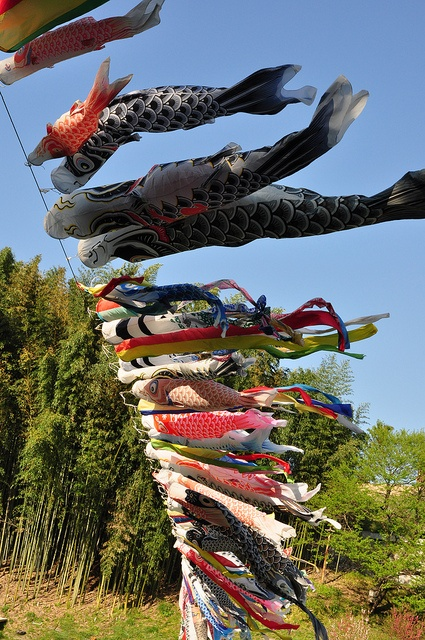83 best images about koinobori koi kites on pinterest for Koi fish kite