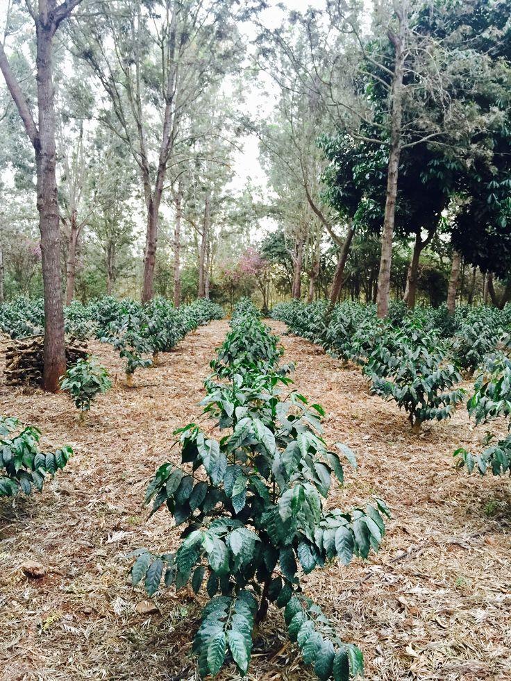 Tanzania | Ngorongoro Farm House Coffee