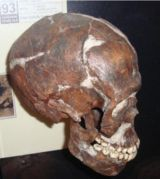 So Why Don't We Still Call Them Cro-Magnon?  The more we learn about early modern humans, the less we feel confident about the early classification systems we developed more than 130 years ago. The term Cro-Magnon doesn't refer to a particular taxonomy or even a particular group located in a particular place. The word is not precise enough, and so most paleontologists prefer to use Anatomically Modern or Early Modern Humans.
