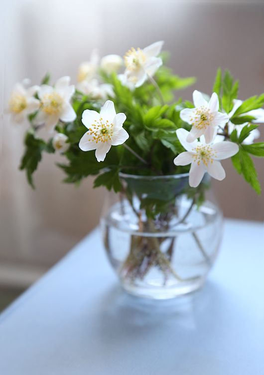 Simple white flowers.