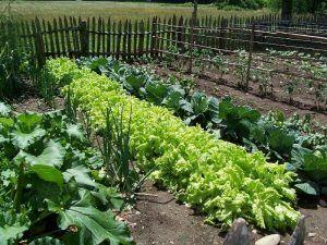 Plant Your Own Organic Vegetable Garden http://www.healthyorganics.net/
