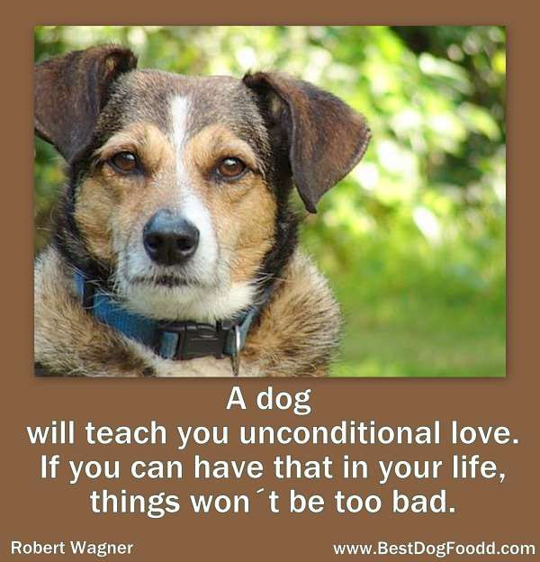 A dog will teach you unconditional love.