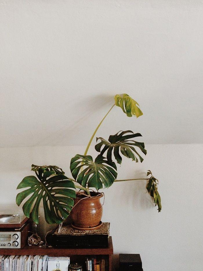 477 besten botanical bilder auf pinterest zimmerpflanzen g rtnern und sukkulenten. Black Bedroom Furniture Sets. Home Design Ideas