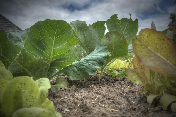 HOW MUCH DO YOU NEED TO KNOW BEFORE YOU CAN START GROWING ORGANIC FOOD?