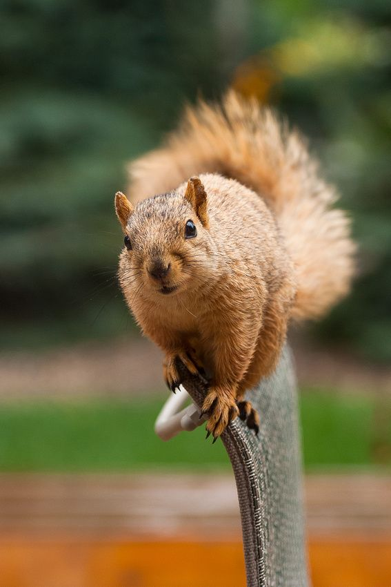 Squirrel Photography By James Marvin Phelps Wild Animals Photos Cute Squirrel Cute Animals