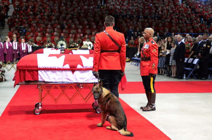 Fallen Mountie Dave Ross' Dog Danny Says Final Goodbye. Constable Dave Ross' dog Danny broke the hearts of a nation Tuesday as he cried at the foot of his dead master's casket.