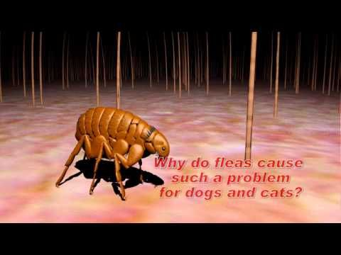 Dog Fleas Symptoms: What To Look For And When To Act | The Pet God | Best Pet Care Guide & Reviews