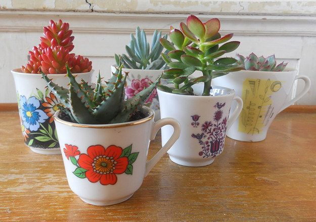 Teacup Succulents   36 Totally Easy DIY Projects To Try In 2016