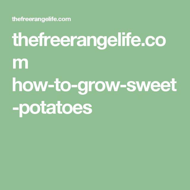 thefreerangelife.com how-to-grow-sweet-potatoes