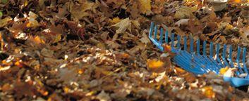 Kış gelmeden son çim biçme! - Kasım, Sonbahar, Çim, Çimen, Çim Bakımı, Çim Biçme Makineleri