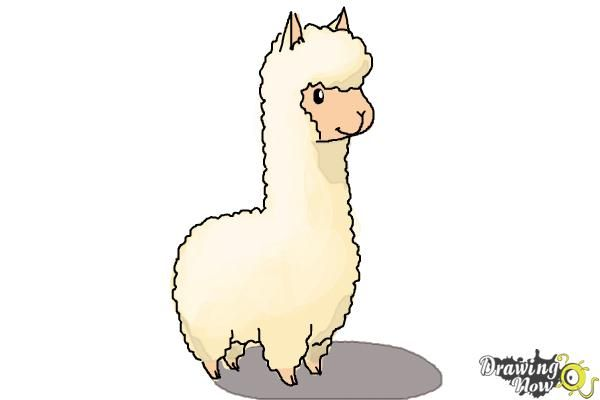 How To Draw A Llama For Kids Step 7 Animal Drawings Easy