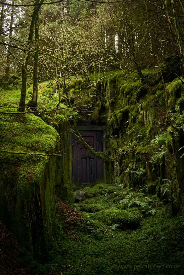 Fantasy Woods Aesthetic