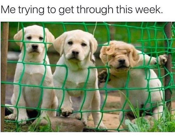 Bad Day Meme Funny : Funny dog memes that will cure your bad day justviral