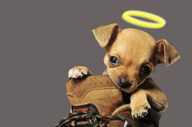 Natural Remedies To Stop Puppy From Chewing