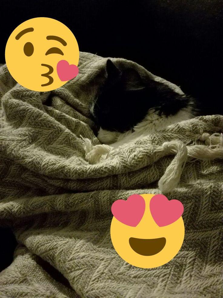 En un día de #Frío No ha nada mejor que mi #frazadita! <3 #CatLovers #AmoaMiGato http://gatulandia.com