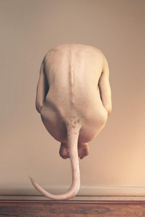 Metamorphosis by Jonathan Ducruix