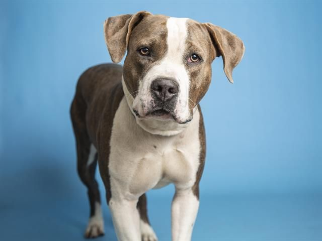 Adopt Frank The Tank On In 2020 Dog Adoption Cute Animal Photos