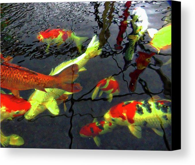 Majestic Koi Carp by Dorothy Berry-Lound. Koi Carp are descendants of the common carp and are bred for ornamental purposes. They are characterised by their patterning and bright red, yellow, orange and white colouring. Here a group of majestic Koi Carp swim slowly around, a wonderful image of movement and shapes. #printsforsale
