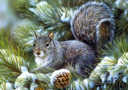 Squirrels animals rodents art artistic nature wildlife winter snow seasons trees branch limb fir pine face eyes whiskers