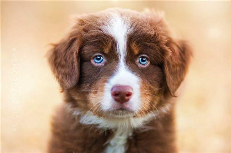 Photographer Alicja Zmyslowska Takes Adorable Images Of Cute Dogs