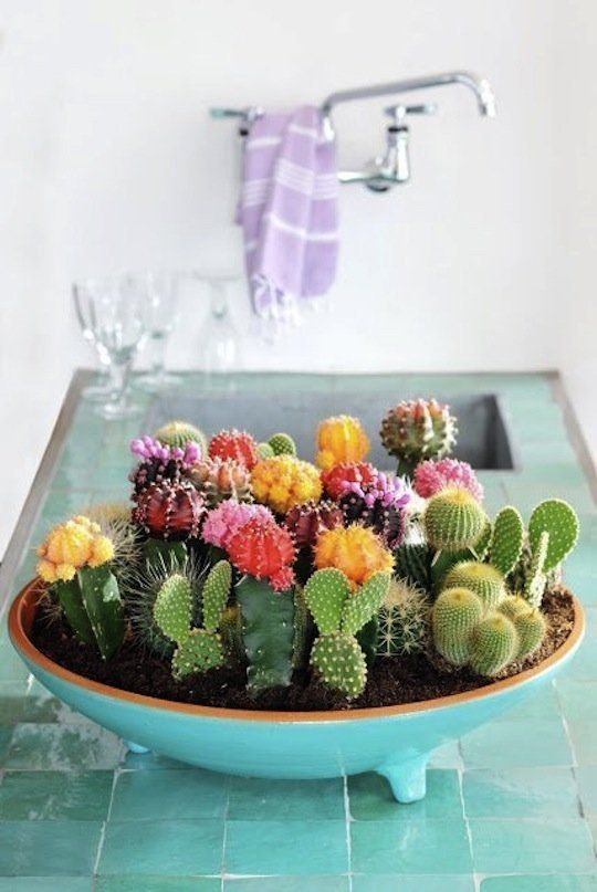 Inspired By: Succulent & Cactus Gardens — Apartment Therapy More information... http://recipes-food.vivaint.biz