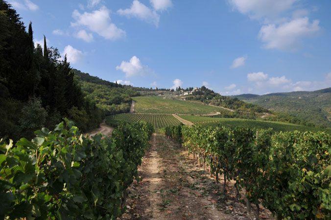www.verrazzano.com