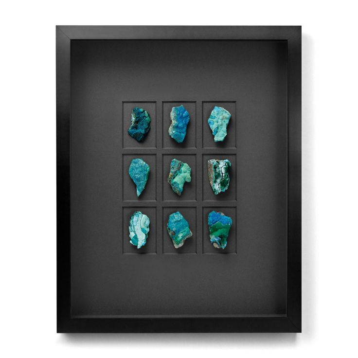 Love this small collection of seashells. The black framing really brings out the pop of color.  #kellys #salem #oregon