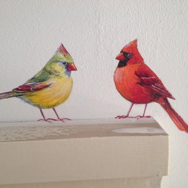 #kardinal birds #kardinaal vogels