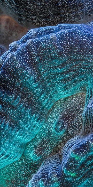 Dit is een soort van lichtgevend koraal. PIN: Floortje