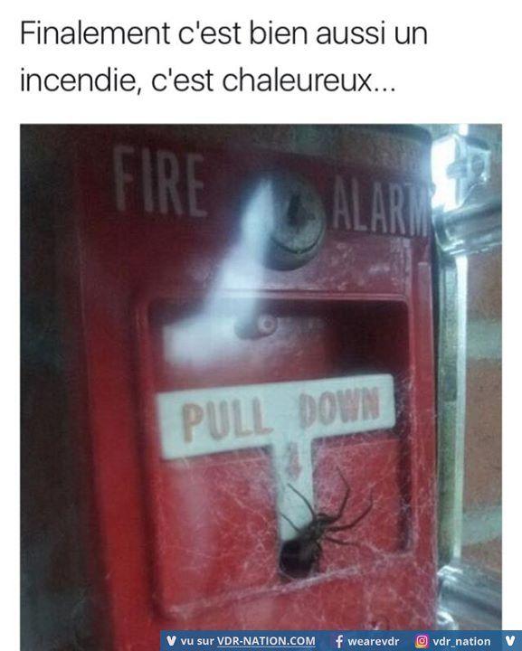 L'araignée ou être  brûler vif à choir je préfère l'araignée